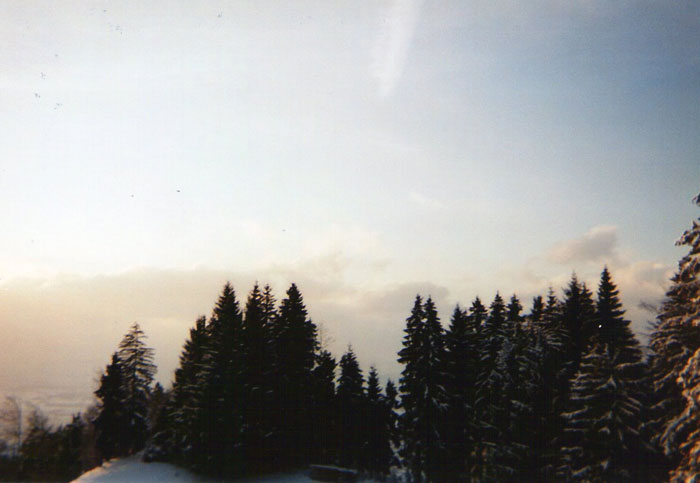 img318